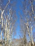 Drevored v parku... še čakamo na listje